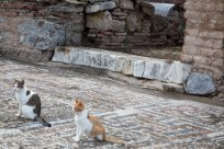 The feral cats of Ephesus