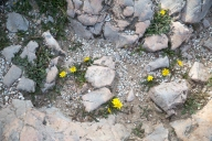 Flowers among the paving stones