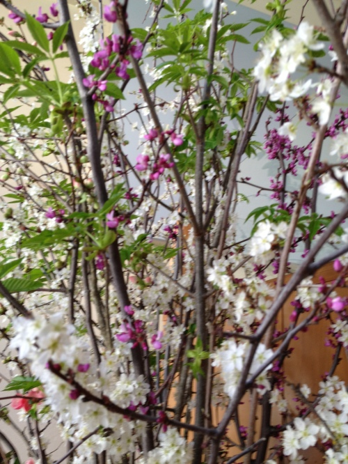Branches of Spring-flowering trees in the entryway