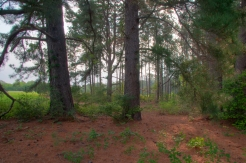 Piney Woods