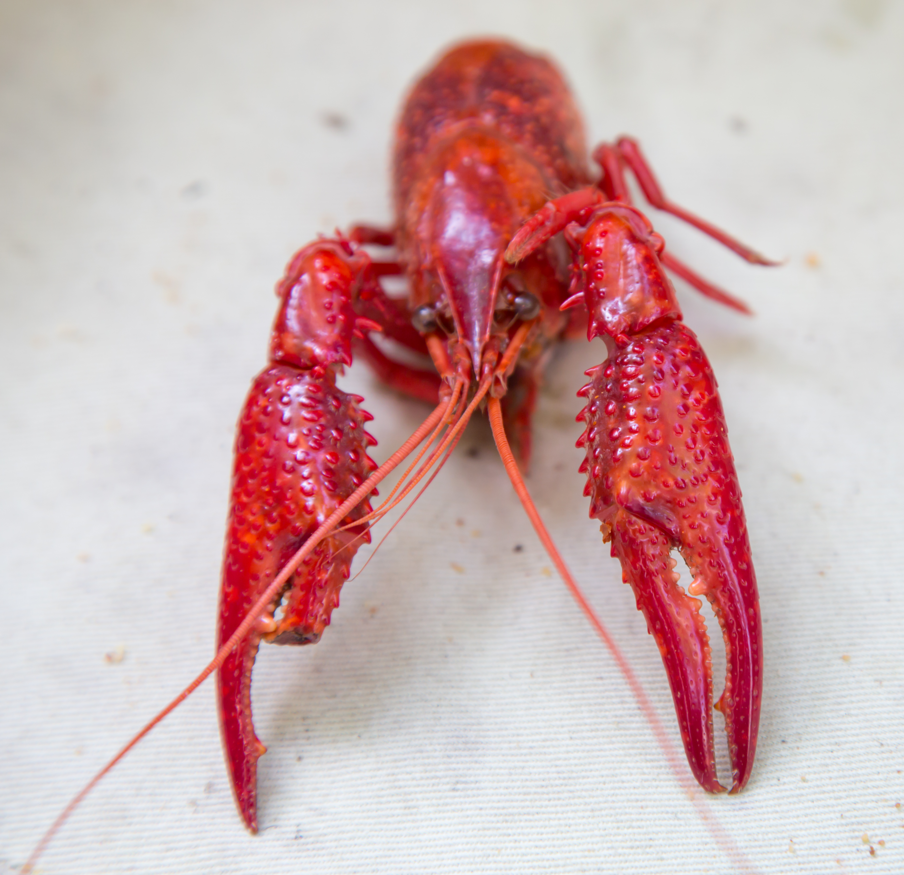 CAJUN CRAWFISH BOIL – IN SILICON VALLEY??