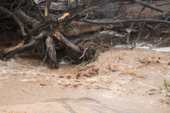 Rushing water. One of the reasons you don't want to get stuck in an arroyo during a summer storm
