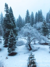 Fresh snow in Yosemite