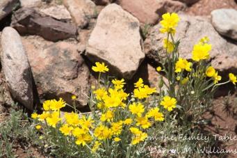 Pecos Pueblo-7