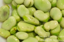 Blanched fava beans with the thick outer skin ready to be removed