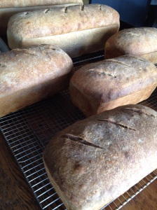 Fennel-pollen-scented levain cooling