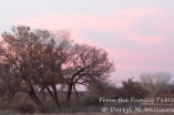 Gathering dusk at Bosque del Apache