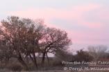 Gathering dusk at Bosque del Apache