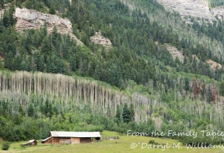 Aspens lined up on the cliffs above an old barn