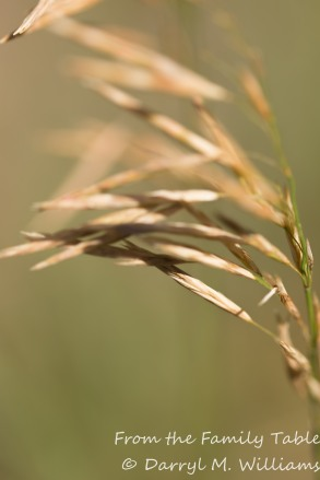 Grass on the roadside