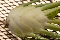"The beautiful ""bulb"" of fennel"