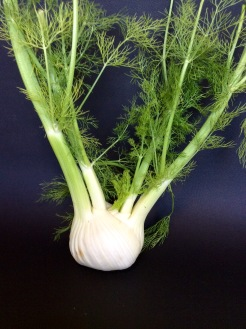 Fennel bulb with stems and fronds